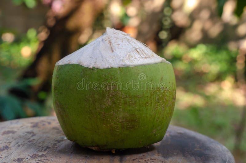 Плод кокоса на деревянном стуле стоковое фото rf