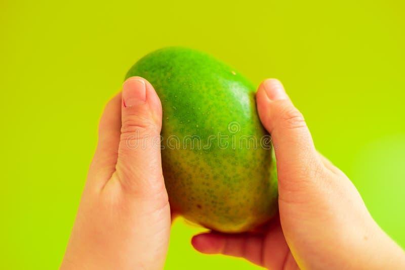 Плод манго удерживания руки на зеленой предпосылке стоковое изображение rf