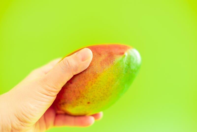 Плод манго удерживания руки на зеленой предпосылке стоковые фотографии rf