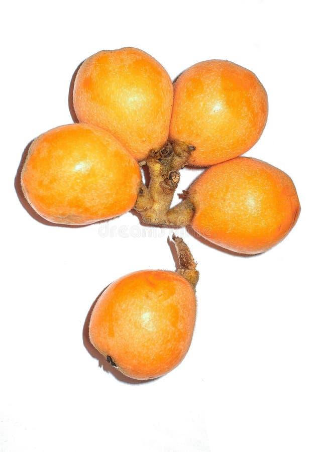 Плод мушмулы стоковые изображения rf