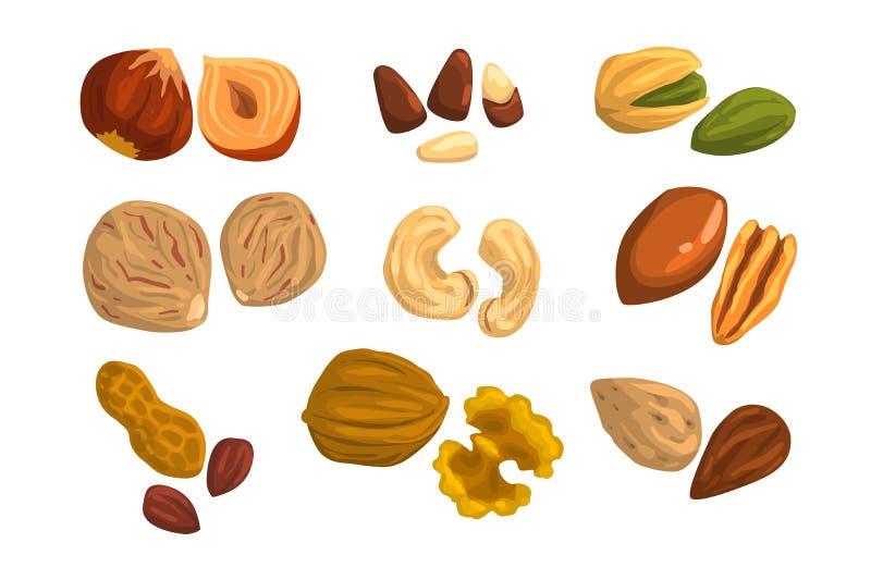 Плоские значки вектора гаек и семян Фундук, фисташка, анакардия, мускат, грецкий орех, гайка Бразилии, пекан, арахис и миндалина иллюстрация вектора