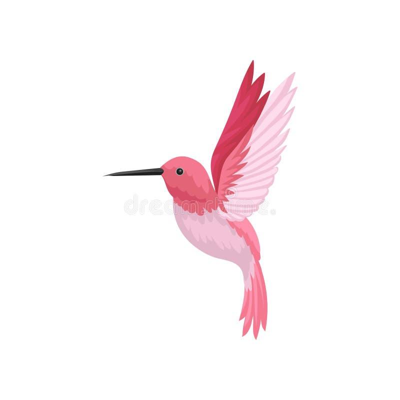 Плоский значок вектора колибри летания Colibri с розовыми пер и длиной утончает клюв Живая природа и тема фауны иллюстрация штока