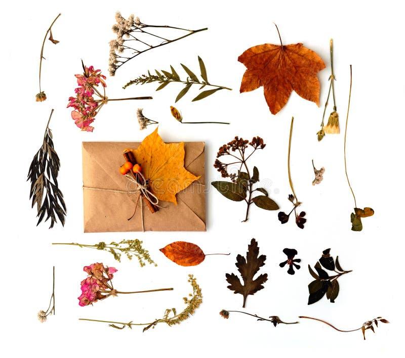 Плоский состав положения с листьями стоковое фото rf