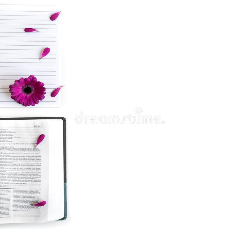 Плоское положение: открытые библия, книга и пинк, пурпур, violette, красный цветок Gerbera с лепестками стоковые изображения rf