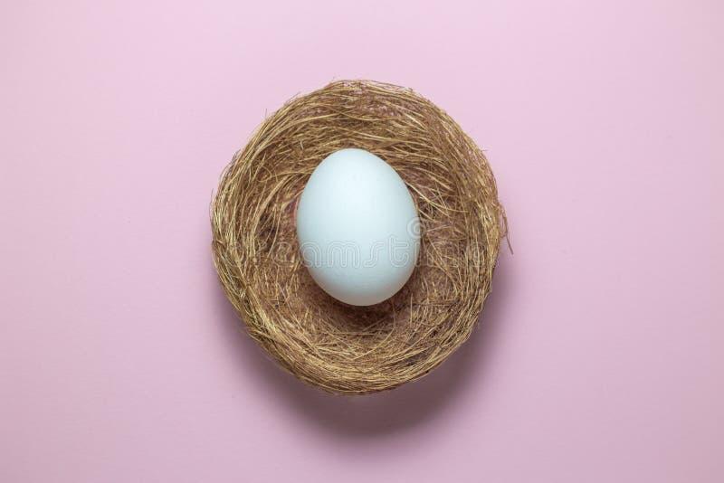 Плоское положение яичка в гнезде на простой розовой предпосылке стоковое изображение rf