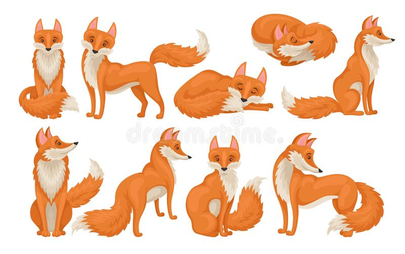 Плоское vectoe установило яркой красной лисы в различных действиях Дикая тварь с пушистым кабелем Животное леса мультфильма иллюстрация штока