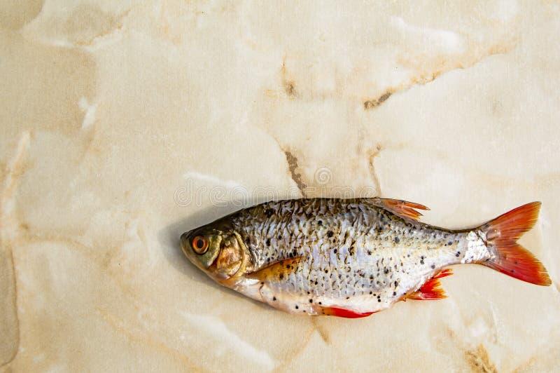 Плотва рыб с красными ребрами освобоженными масштабов на светлой предпосылке стоковое фото
