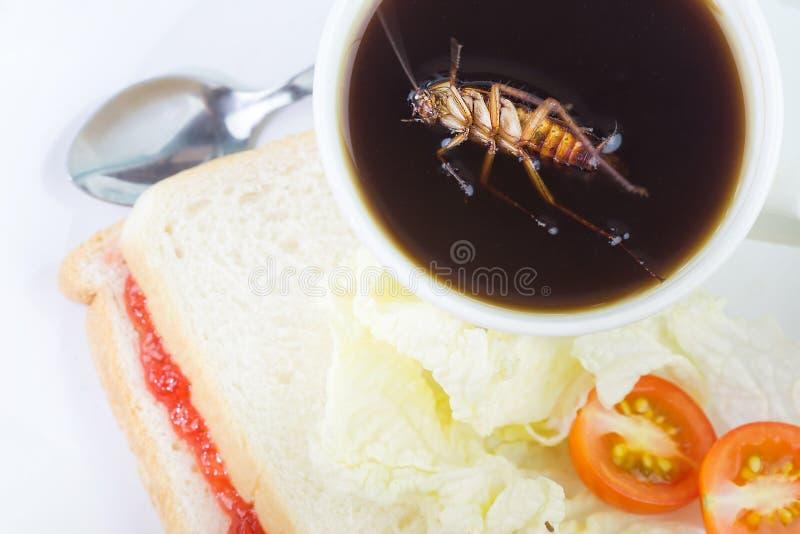 Плотва спать смертельно в чашке кофе Проблема в доме из-за тараканов живя в кухне Таракан есть кого стоковое изображение