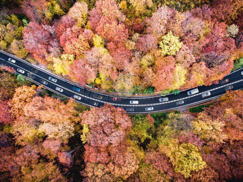 Плотное движение на ринве шоссе лес с автомобилями вставленными в заторе движения стоковое фото rf