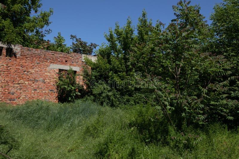 Плотно перерастанный с деревьями отказал от конструкции на ясный солнечный день стоковая фотография rf