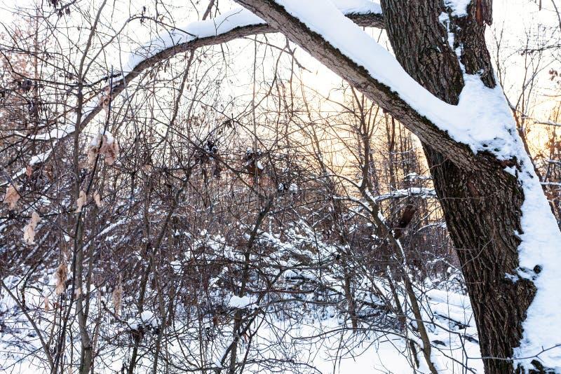 Плотный подлесок в покрытом снег городском парке стоковое изображение rf