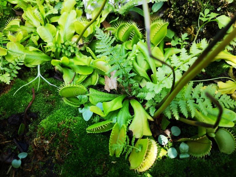 Плоть есть завод в зеленом цвете стоковые фотографии rf
