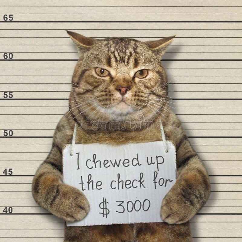 Плохой кот жевал вверх проверку стоковая фотография