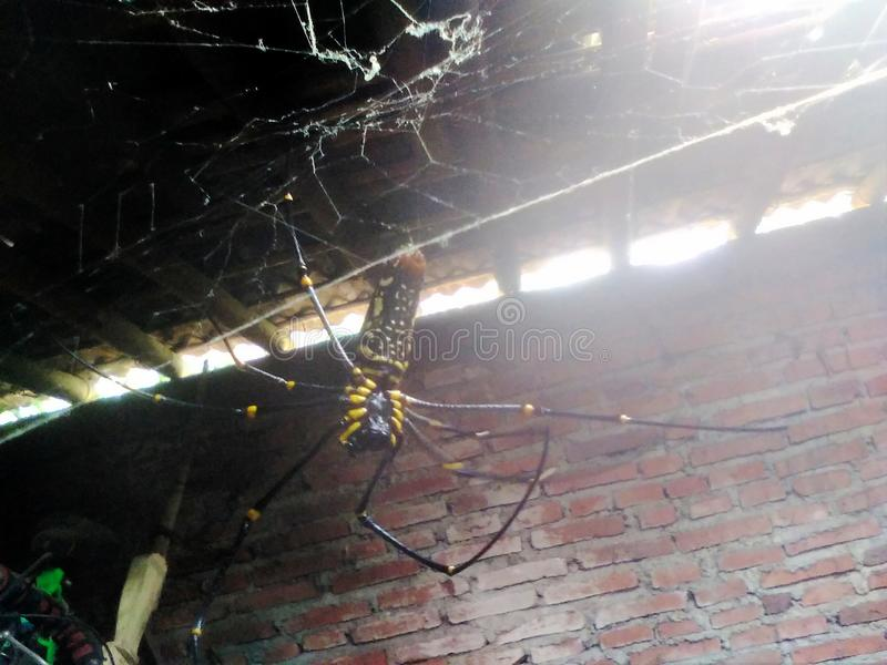 Плохой паук стоковая фотография