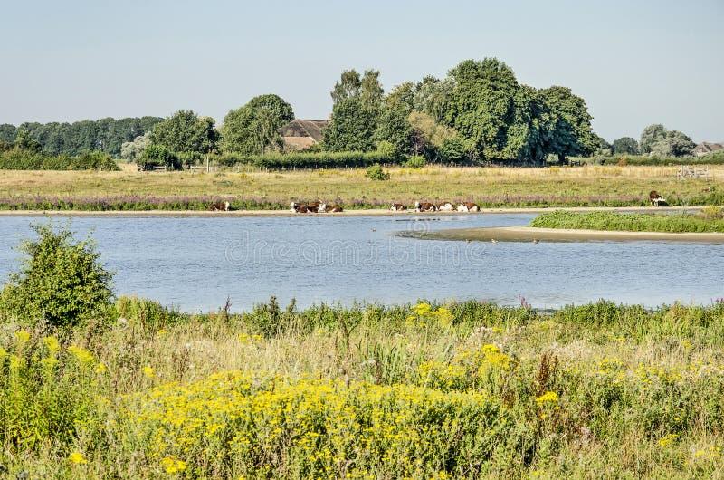 Площадь паводковых равнин вблизи Зволле, Нидерланды стоковые фотографии rf