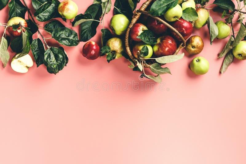 Площадь свежих яблок с листьями и ветвями на розовом фоне стоковое изображение