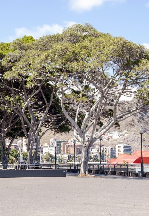 Площадь de España в Santa Cruz de Тенерифе стоковые изображения rf