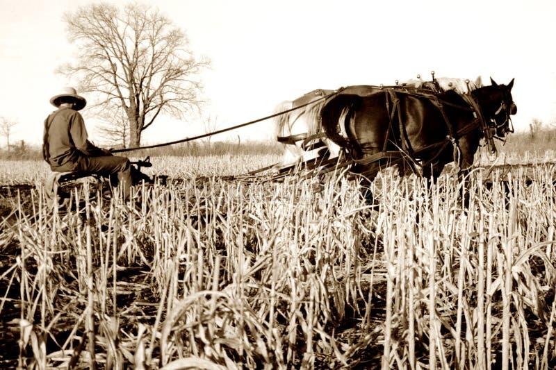 плужок лошадей amish стоковое фото