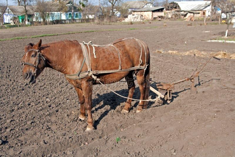 плужок лошади стоковое изображение rf