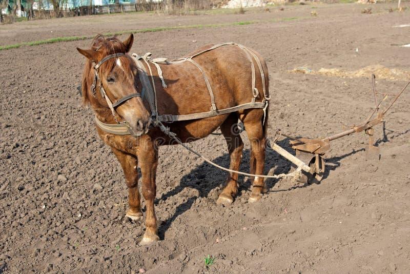 плужок лошади стоковое фото rf