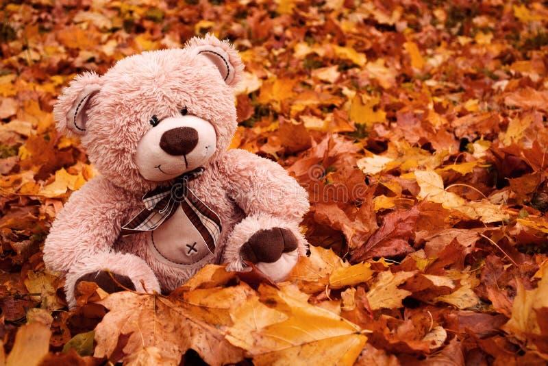 Плюшевый медвежонок на листьях осени стоковое фото