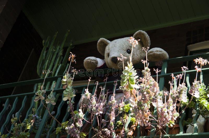 Плюшевый медвежонок смотря вас от балкона на Surry Hills, Сиднее стоковые изображения rf