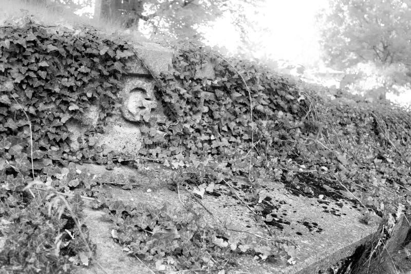 Плющ покрыл тягчайшую отметку на старом кладбище стоковые фото