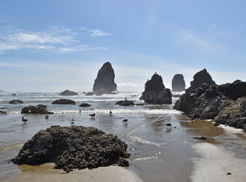 Пляжная сцена с чайками стоковое изображение