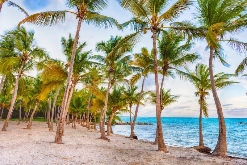 Пляж Анс Шамапне в Гваделупе стоковое фото rf