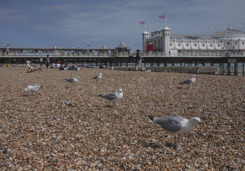 Пляж в Брайтоне, Англии, Великобритании - чайках, камешках и пристани стоковое фото rf