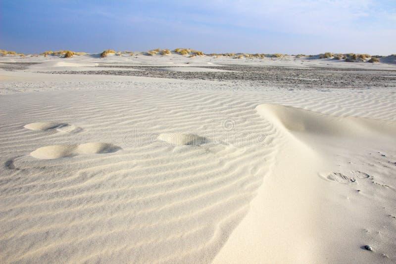Пляж и дюны Schiermonnikoog стоковые фотографии rf