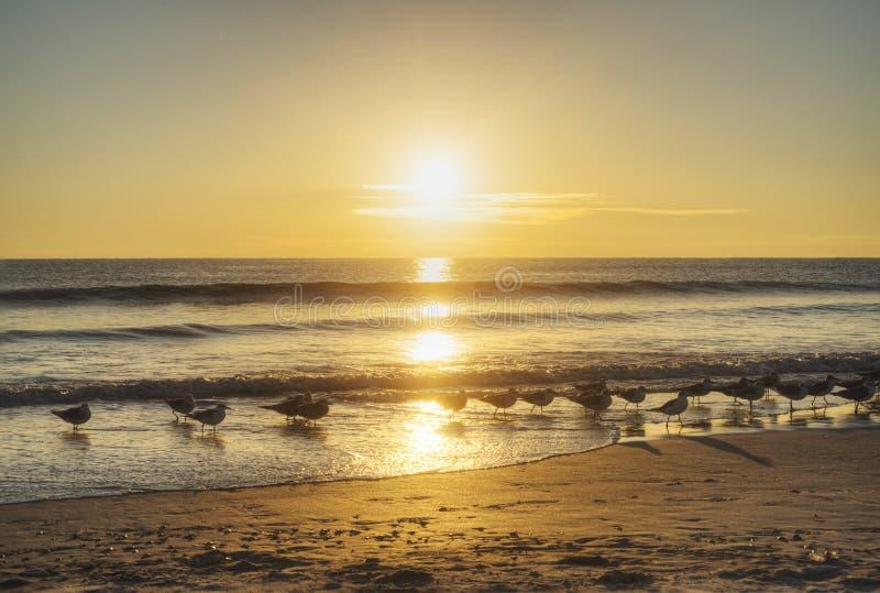 Пляж какао на восходе солнца стоковое фото