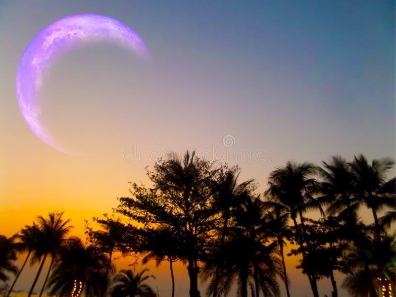 пляж кокоса силуэта явления луны затмения редкий стоковое фото rf