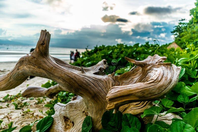 Пляж моря Radhanagar стоковые изображения rf
