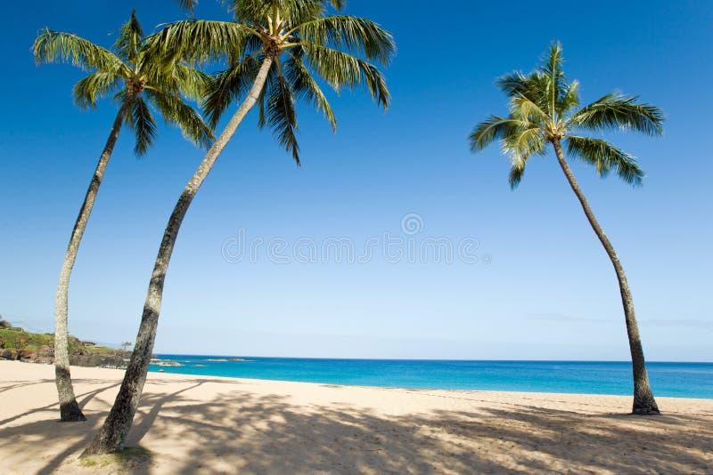 Пляж пальмы стоковое фото rf
