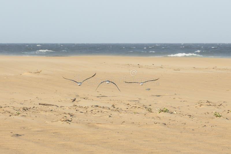 Пляж Сент-Люсия, Южной Африки стоковое изображение
