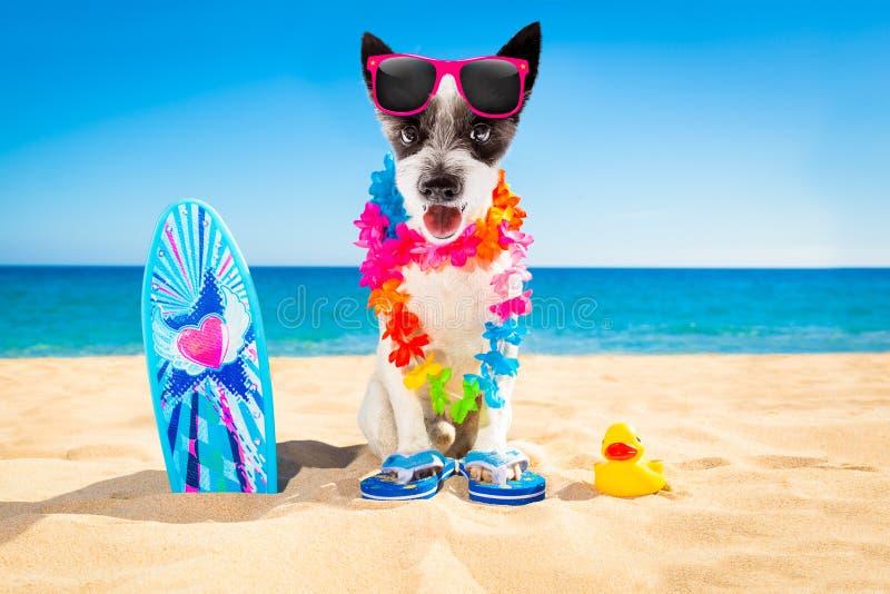 Пляж собаки серфера стоковые фото