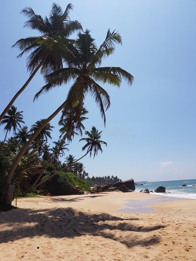 Пляж с пальмами, песчаниками и камнями стоковое изображение