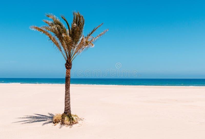 Пляж с пальмой стоковое фото rf