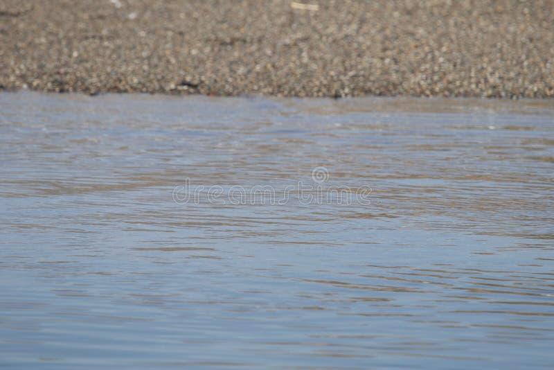 Пляж утеса козы - северозападное Sonoma County, Калифорния, уплотнения на рте русского реки, и южном конце t стоковые изображения