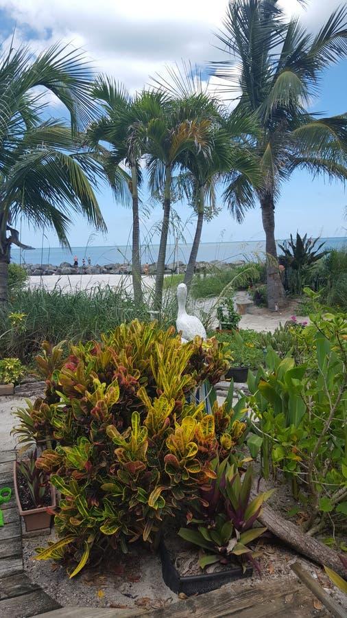 Пляж Флорида st Pete рая пляжа стоковое фото rf