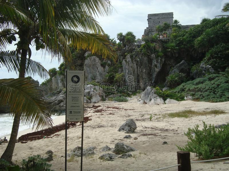 Пляж черепахи в Tulum Мексике стоковые изображения rf
