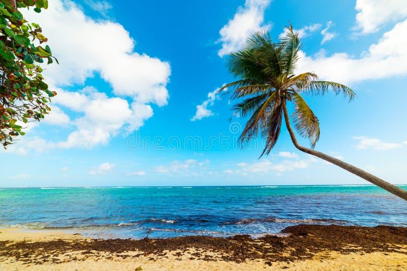Пляж Autre Bord в Гваделупе стоковое фото rf