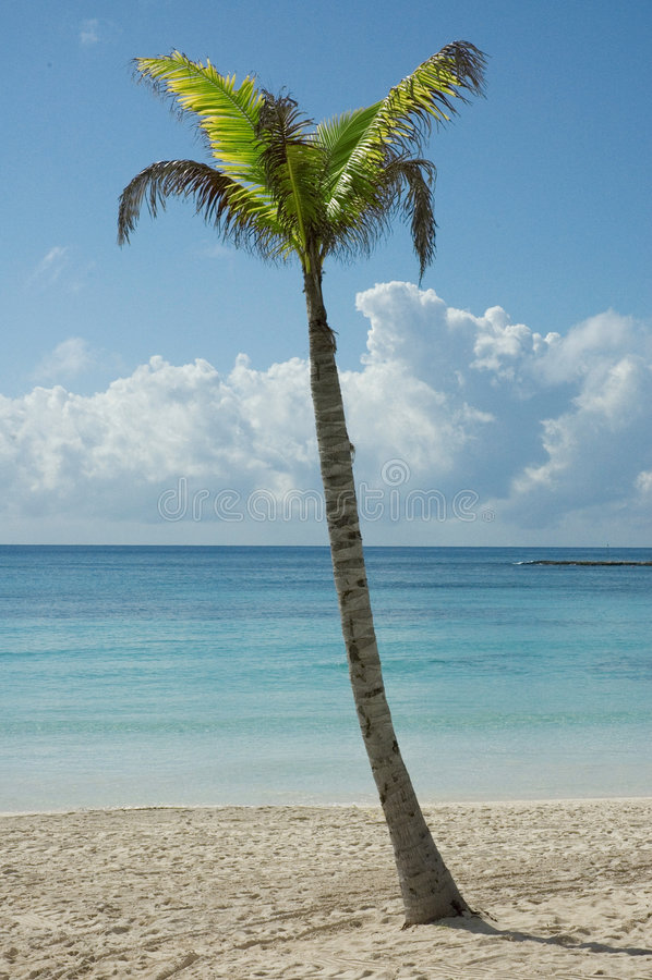 пляж caribbean стоковые фото