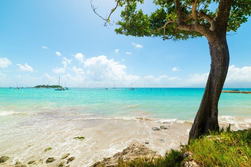 Пляж Datcha Ла в Гваделупе стоковое изображение rf