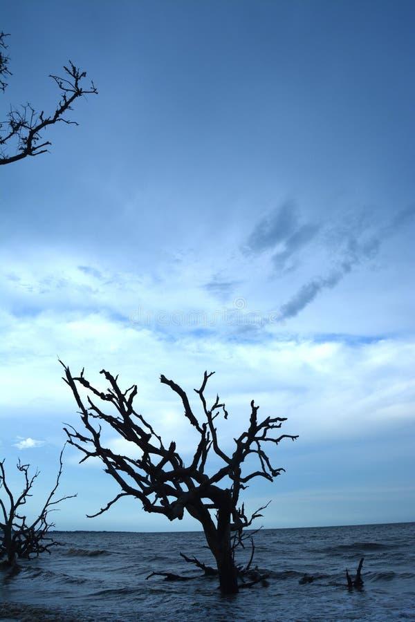 Пляж Driftwood стоковая фотография rf