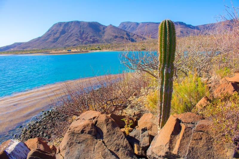 Пляж El Requeson, бирюза Mulege mar стоковые фотографии rf