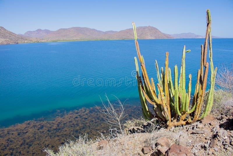 Пляж El Requeson, бирюза Mulege mar стоковое фото rf