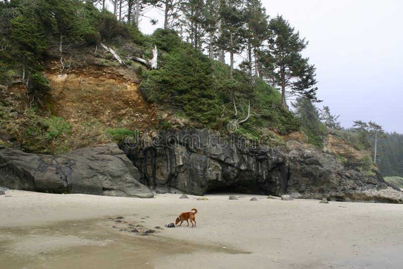 Пляж Hobbit - Орегон стоковые фотографии rf