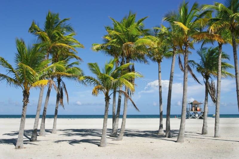 пляж miami солнечный стоковое фото